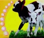 Фотография в Домашние животные Товары для животных Регулятор Водно-Солевого Баланса с ПробиотикомРеВоСоБ-ПРО в Москве 700