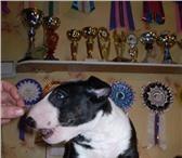 Foto в Домашние животные Услуги для животных Ветеринарная помощь вашим домашним любимым в Екатеринбурге 500