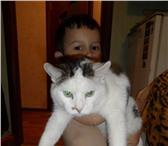 Фотография в Help! Находки Пропал кот,кличка-Бим.Пропал на Ленина/Гайдара.Пожалуйста, в Дзержинске 1000