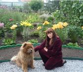 Фотография в Домашние животные Услуги для животных Предлагаются услуги опытного инструктора в Новосибирске 1300
