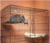 Изображение в Домашние животные Услуги для животных Уезжаете в отпуск и вам нес кем оставить в Тюмени 300