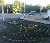 Изображение в Строительство и ремонт Ландшафтный дизайн Компании «Зеленое дерево» со всей ответственностью в Пензе 19
