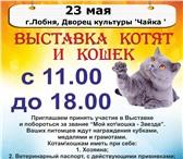 Фото в Домашние животные Выставки кошек Приглашаем принять участие в выставке кошек! в Москве 0