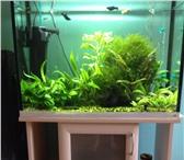 Изображение в Домашние животные Рыбки Продам аквариум 100 литров. С рыбками: мелинезии, в Уфе 11000