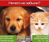 Изображение в Домашние животные Корм для животных www.ЗооСлужба.рф - корма для ваших питомцев в Тольятти 1