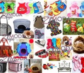 Изображение в Домашние животные Товары для животных ЗвероМОДА - Одежда для собак   Крупнейший в Владивостоке 200