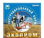 Фотография в Домашние животные Корм для животных В процессе экструдирования ,  под действием в Новосибирске 13