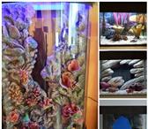 Изображение в Домашние животные Рыбки Marvel-water decor – это комплекс композитных в Перми 1000