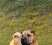 Foto в Домашние животные Разное Отдадим в хорошые,  заботливые руки замечательного в Юбилейный 0
