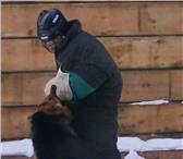 Изображение в Домашние животные Услуги для животных Завели собаку и не знаете как воспитывать?!Вас в Москве 0