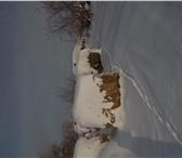 Изображение в Домашние животные Корм для животных продаю сено в рулонах,1 тонна- 3000 руб,сено в Челябинске 3000