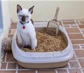 Изображение в Домашние животные Товары для животных Компания реализует древесный наполнитель в Москве 9