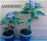 Фотография в Домашние животные Растения Породам комнатные растения. в Москве 150