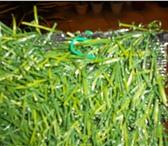 Фотография в Домашние животные Растения искуств.газон ширина 2 метра,длина рулона в Москве 950