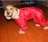 Foto в Домашние животные Вязка собак очаровательная девочка 3 лет приглашает жениха в Пскове 4000