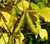 Фото в Домашние животные Растения ООО «КУБАНЬ АГРО» предлагает к реализации:Семена в Краснодаре 50