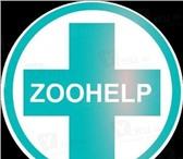 Foto в Домашние животные Товары для животных Сеть ветеринарных клиник ZooHelp расположена в Москве 1