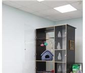 Изображение в Домашние животные Услуги для животных Возьмем на передержку вашего питомца. Небольшая в Москве 300