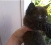 Фотография в ? Отдам даром-приму в дар отдам котенка в хорошие руки два месяца приучен в Смоленске 1