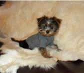 Изображение в Домашние животные Товары для животных Эксклюзивная одежда для собак ручной работы! в Липецке 0