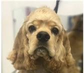 Фотография в Домашние животные Услуги для животных Ваша собака нуждается в стрижке? Замучили в Москве 1000