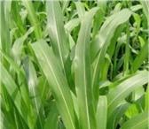 Фотография в Домашние животные Растения ООО «КУБАНЬ АГРО» предлагает к реализации:Семена в Краснодаре 45