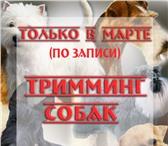 Фото в Домашние животные Услуги для животных Внимание! АКЦИЯ!ТОЛЬКО В МАРТЕ 2015г. ТРИММИНГ в Краснодаре 0