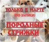 Фото в Домашние животные Услуги для животных Внимание! АКЦИЯ!ТОЛЬКО В МАРТЕ 2015г. СТРИЖКА в Краснодаре 0