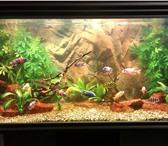 Фотография в Домашние животные Услуги для животных Устанавливаем аквариумы в Калуге в офисы, в Калуге 3000