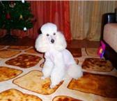 Foto в Домашние животные Услуги для животных Стрижка кошек, котов и собак всех пород в в Москве 1000