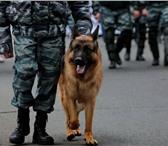 Фотография в Домашние животные Услуги для животных Индивидуальная дрессировка собак и по желанию в Красноярске 500