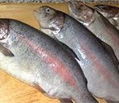 Изображение в Домашние животные Рыбки ООО «РОДНИК» - рыбалка в Щёлковском в Москве 350