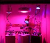 Изображение в Домашние животные Растения Тепличные светодиодные светильники отличаются в Владимире 2900