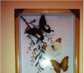 Изображение в Хобби и увлечения Коллекционирование Продаю коллекцию бабочек (7 видов),  оформленных в Москве 1600