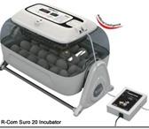 Изображение в Домашние животные Товары для животных Самая лучшая модель инкубатора,по оценкам в Сочи 7900