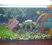 Foto в Домашние животные Рыбки Продам аквариум с рыбками и без рыбок ,дизайн в Пензе 1800