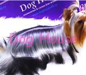 Фотография в Домашние животные Услуги для животных Акции:При первом посещении салона, Вам предоставляется в Калуге 500