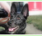 Фотография в Домашние животные Приму в дар Отдам собаку-девочку. В квартиру или в частный в Красноярске 0