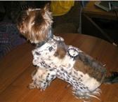 Изображение в Домашние животные Товары для животных Продаётся новая шубка на собачку мелкой породы в Дубна 2000