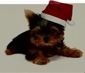 Фотография в Домашние животные Стрижка собак ˙˙·٠•♥ СТРИЖКА٠•♥ в Всеволожск 0